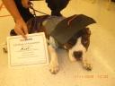 degreedog