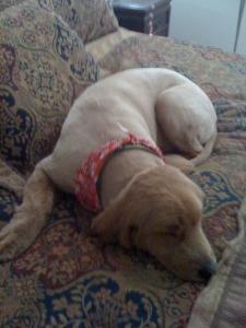 A Dog Honors Ada Lovelace